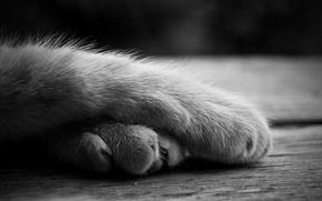 Обои кошка, лежит, лапы