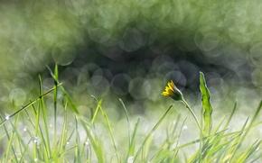 Картинка одуванчик, блики, трава, желтый, цветок