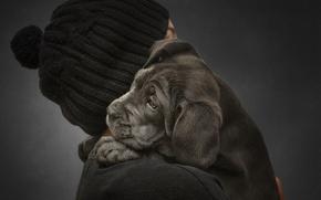 Картинка фон, человек, собака