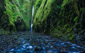 Обои река Колумбия, водопад, Columbia River, Lower Oneonta Falls, Орегон, мох, Oregon, ущелье, Oneonta Gorge, ущелье ...