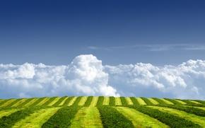 Обои поле, лето, небо, трава, облака