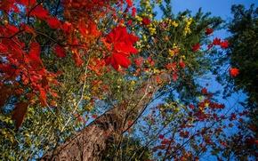 Картинка осень, небо, листья, ветки, дерево, ствол
