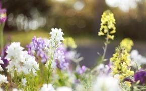 Обои трава, свет, цветы, природа, блики, поляна, растения, весна, желтые, размытость, светлые, белые, цветение, flowers, сиреневые
