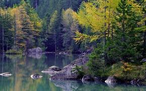 Картинка осень, лес, деревья, горы, озеро, камни