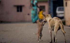 Картинка собаки, Индия, щенок
