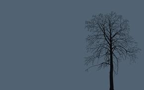 Картинка ветки, природа, фон, дерево