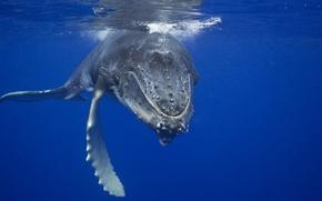 Картинка синева, океан, кит