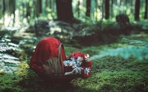 Картинка лес, волк, ситуация, красная шапочка, голова