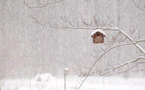 Картинка зима, домик, метель