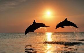 Картинка море, закат, Дельфины