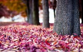 Картинка осень, деревья, фон, стволы, краски, листва, размытость, кора, разноцветные, посадки, ворох листьев, в парке