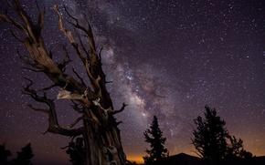 Обои Млечный путь, ночь, небо, победитель конкурса астрономической фотографии :-), деревья, выдержка