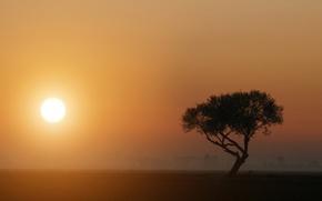 Картинка туман, дерево, Солнце