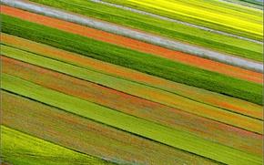Картинка цветы, природа, плантация
