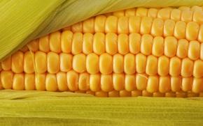Обои макро, corn, злак, полезно, цвет, кукуруза, вкусно, еда, пища, желтый