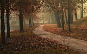 Картинка озеро, парк, путь, туман, деревья, осень, листья