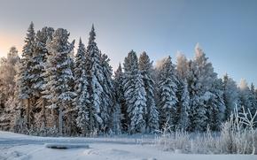 Картинка зима, лес, снег