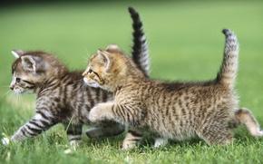 Картинка животные, трава, кот, cat, два котенка