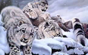 Обои Daniel Renn Pierce, ирбис, снег, арт, зима, снежный барс
