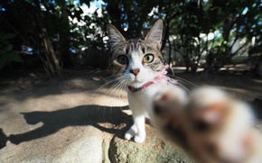 Картинка глаза, усы, лапа, котик, моська
