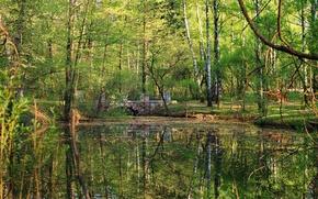 Картинка лес, вода, деревья, пейзаж, мост, пруд, парк, отражение, растения