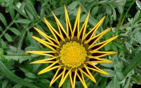 Картинка листья, цветы, желтый
