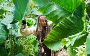 Обои пираты карибского моря 4, джонни депп, johnny depp, джек воробей, джунгли, листья