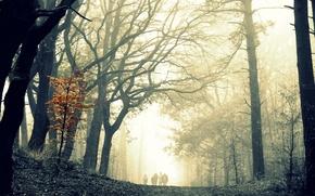 Картинка лес, деревья, туман, прогулка