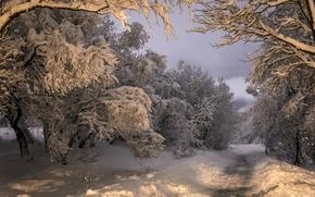 Картинка снег, зима, дорога, деревья, Коупавогюр, Kopavogur, Iceland, Исландия, лес