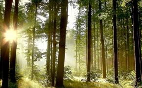 Обои природа, лес, свет