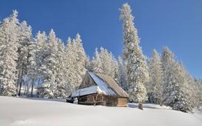 Картинка зима, солнце, снег, Польша, сараюшка