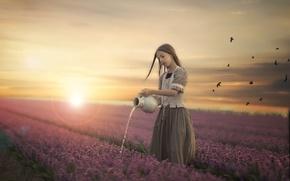Обои девочка, поле, цветы, закат
