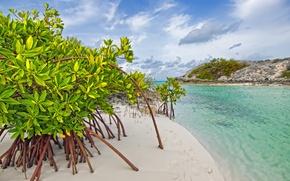 Картинка песок, море, вода, деревья, заросли, beach, mangrove, galloway, long island, bahamas, мангры