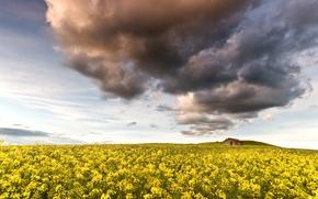 Картинка поле, небо, облака, цветы, природа, домик, жёлтые, рапс