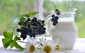 Картинка лето, ромашка, молоко, кувшин, смородина