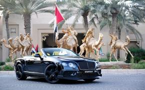 Обои черный, Bentley, Continental, кабриолет, бентли, континенталь, Startech