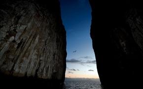Картинка птицы, мощь, разлом, скалы.океан