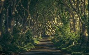 Картинка дорога, деревья, ветки, природа