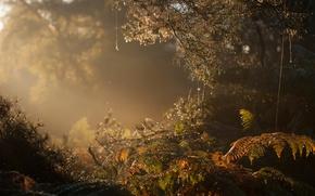 Обои лес, утро, туман
