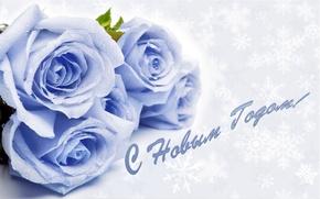 Картинка снежинки, розы, поздравление