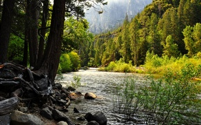 Обои калифорния, озеро, сша, лес, Йосемити