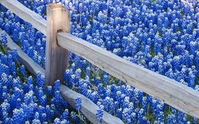 Картинка цветы, природа, ограда
