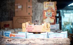 Картинка кошка, взгляд, коробки