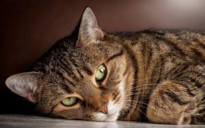 Картинка кошка, лежит, взгляд, полосатый, смотрит, зеленые, глаза, кот