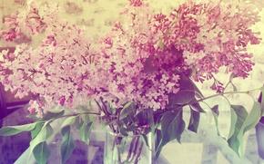 Картинка лето, цветы, сирень