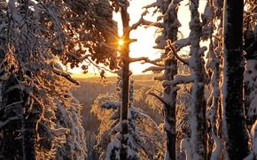 Картинка зима, лес, Finland, Winter forest