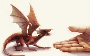 Картинка дракон, рука, крылья, Маленький, ладонь