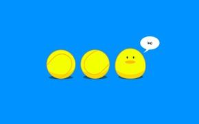 Обои мячи, мячик, цыпленок, теннис, wasup, wassup, what's up