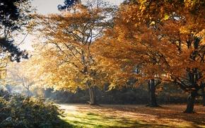 Картинка осень, листья, деревья, парк, желтые
