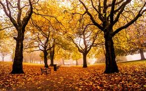 Картинка дорога, осень, листья, деревья, парк, Англия, желтые, Великобритания, аллея, скамейки, лавочки, лавки, Sheffield, Шеффилд, Weston …